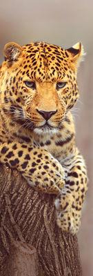 Фотообои Леопард артикул 110027
