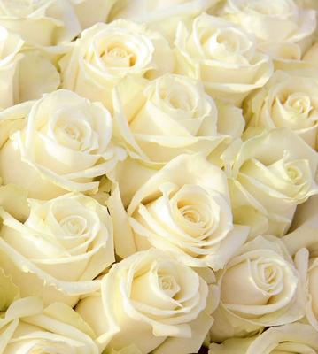 Фотообои Нежные розы артикул 140104