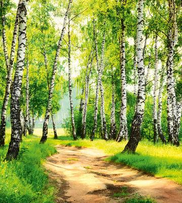 Фотообои Березовый лес артикул 140366