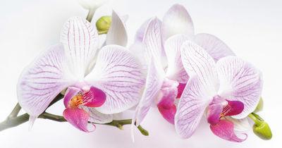 Фотообои Белый цветок орхидеи артикул 230092