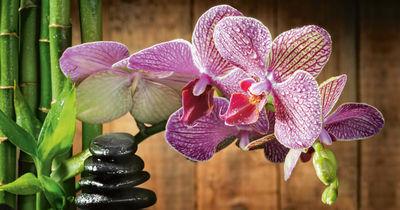 Фотообои Орхидея и камни артикул 230098