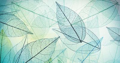 Фотообои Абстрактные листья артикул 230470