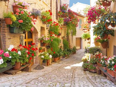 Фотообои Город цветов артикул 250138