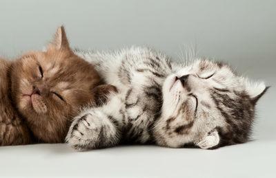 Фотообои Котята артикул E230441