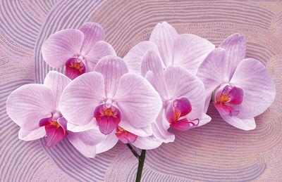 Фотообои Розовая орхидея артикул LA230522