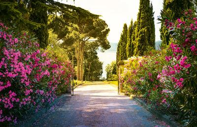 Фотообои Дорога в саду артикул LA230530