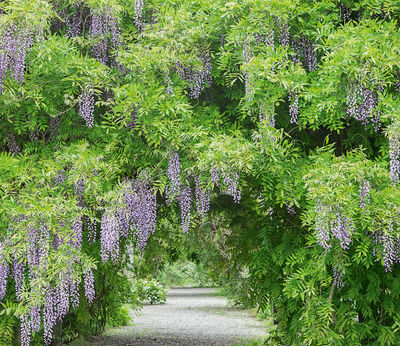 Фотообои Ботанический сад артикул LA250560