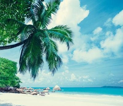 Фотообои Пальма на пляже артикул LA250561